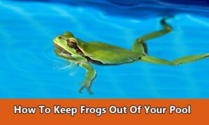 How to keep frogs out of your pool