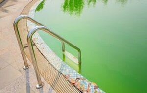 Get Algae Out Of Pool